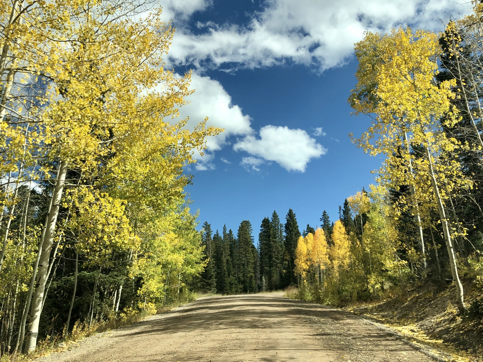 Aspen Colorado fall